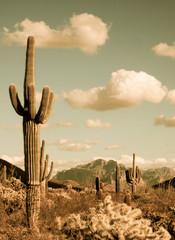 Door stickers Desert Saguaro forest
