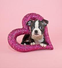 Wall Mural - Puppy Love