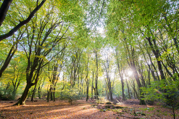 Forest with leaf trees