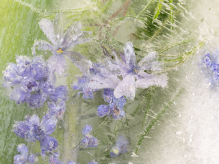 abstraction of light lavender flowers