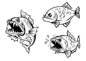 Angry piranha fishes with sharp teeth