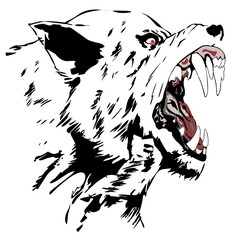 Wolf, 