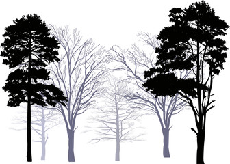 pines and bare trees forest isolated on white