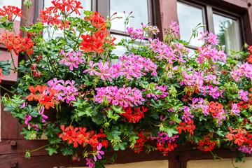 Blumenpracht am Fenster