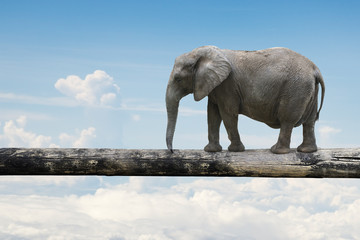 Elephant balancing on tree trunk