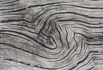 Unique tree texture