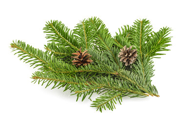 Fir tree branch on white