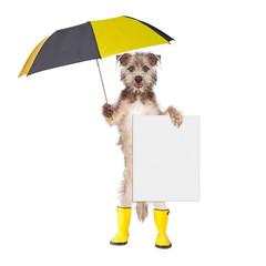 Fototapete - Dog With Rain Umbrella and Sign