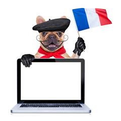 Fototapete - french proud   dog