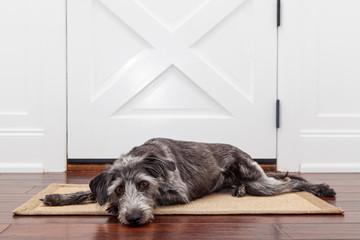 Sad Dog Waiting For Owner