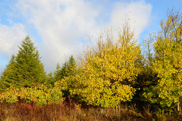 Wall Mural - Mountain Meadow in Fall Colors in Early Morning