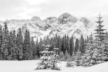 Black and white landscape of snow covered pine trees and mountain peaks on a cloudy winter day.
