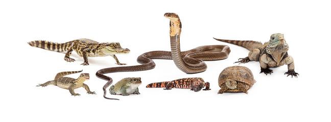 Group of Various Reptiles Wall mural