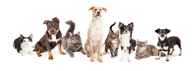 Wall Mural - Large Group of Cats and Dogs Together