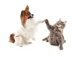 Papillon Dog and Cat High Five