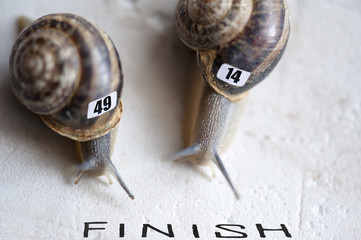 Conceptual: snails in a running race