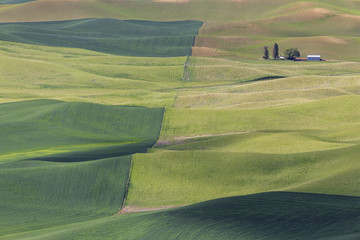 USA, Idaho, Palouse, view to rolling landscape with wheat fields from Steptoe Butte