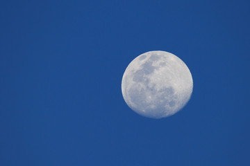 Big moon in a night blue sky