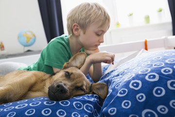 Dog lying on bed with boy using digital tablet