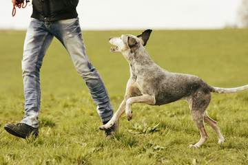 Man and dog running on meadow