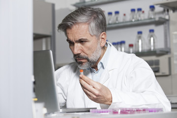 Scientist holding test sample at laptop in laboratory