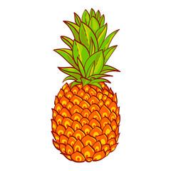 Pineapple. Hand drawn vector. Print on t-shirt