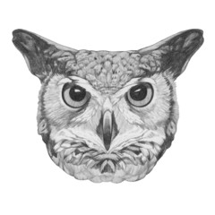 Original drawing of Owl. Isolated on white background