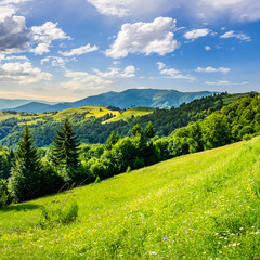 coniferous forest on a  mountain top