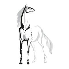 Horse sketh