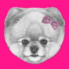 Original drawing of Pomeranian with pink bow. Isolated on colored background.
