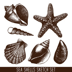 hand drawn sea shell sketch collection