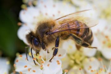 Wasps close up
