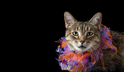 Cat with Purple and Orange Halloween Collar