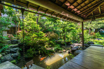 武家屋敷の日本庭園 金沢 野村家