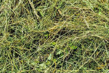 Hintergrund Gras Textur