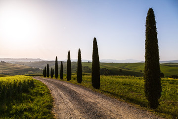 Wall Mural - A country road in Tuscany, Italy.