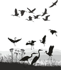 vector illustration Herons on the shores of Lake