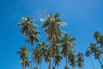 Coconut palm trees and sky in remote location, Southern Province, Sri Lanka, Asia.