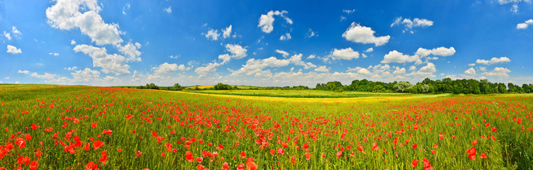 Poster Village Panorama of poppy field in summer countryside