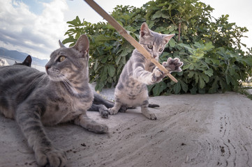 Baby cat playing with a stick