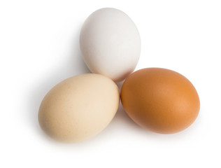 organic eggs of different colors