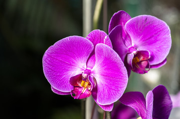 Keuken foto achterwand Orchidee Beautiful blooming orchid