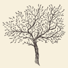 Vintage olive engraved background Hand drawn illustration