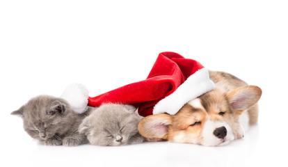 sleeping Pembroke Welsh Corgi puppy dog with santa hat and two k