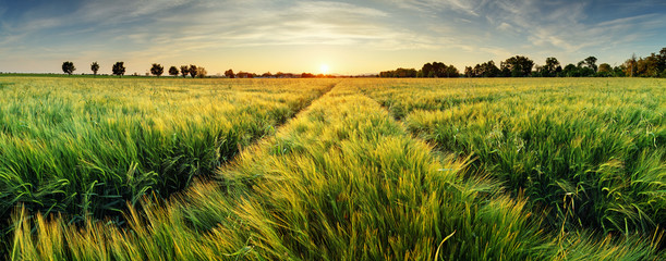 Foto auf AluDibond Kultur Rural landscape with wheat field on sunset