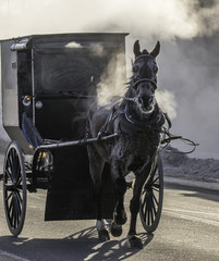 Amish Ride to Town. Photograph of horse drawn buggy in winter.