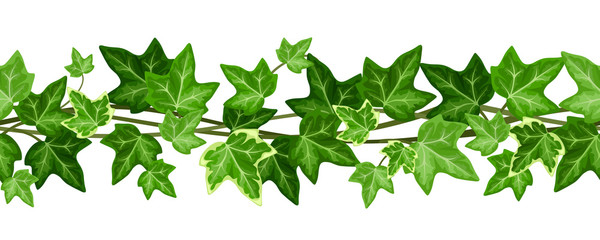 Horizontal seamless garland with ivy leaves. Vector illustration