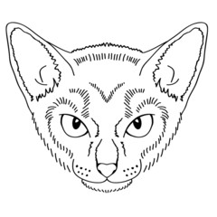 Hand draw cat girl