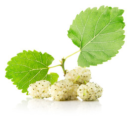 white mulberries isolated on the white background