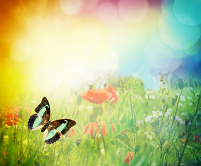 butterfly on a summer sunny meadow